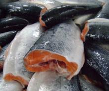 Norway Salmon Fish,Frozen flounder,Squid seafood for sale