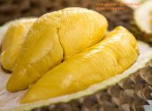 FRESH/  FROZEN   DURIAN  WITH HIGH QUALITY
