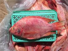 Seafood wholesale top quality fresh fish frozen whole tilapia