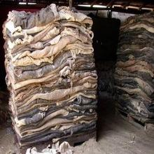 Animal Skin Dry And Wet Salted Donkey/Horse Hide /Wet Cow for sale