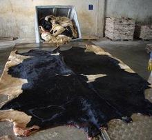 Wet Salted Blue Cow Hides and Animal Skins available in stock