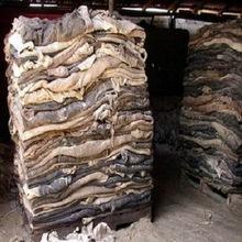 Buy Cow hide Wholesale | Exporters of Wet salted animal hides