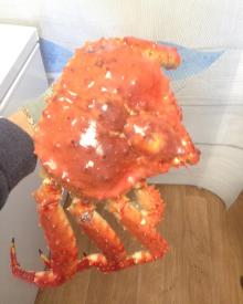 Whole cooked frozen red king crab