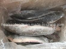 Frozen Catfish Whole Round  Export ed to  Africa