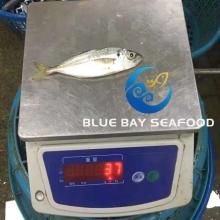 High Quality  Frozen   Fish   Horse   Mackerel  with Good Price for Indonesia Importer