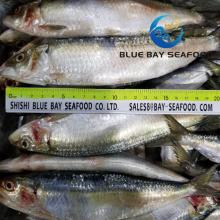 Cheap  Price Delicious  Frozen  Sardine  Fish es  Fish   Seafood
