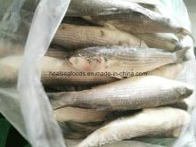 Frozen  Grey   Mullet   Fish  From Chinese Factory