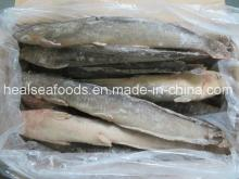 Hot Sale Frozen Cat  Fish  Wr for Africa  Market