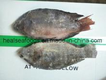 Frozen   Tilapia  Fish Whole Round with Wholesale  Price  Offer