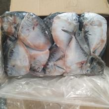 Seafrozen Moon fish  Fresh Moon  Fish  Size 150-200g New Arrival Hot Sale for Indonesia  Market