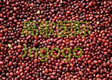 Export New Crop  Food  High Good Qiality  Red  Bean