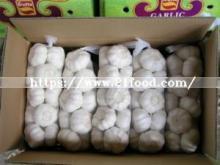 Chinese Export Good Quality Pure White Garlic