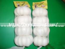 Fresh Chinese Pure White Garlic