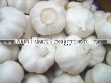 New Crop Natural Pure White Garlic with Snow Skin