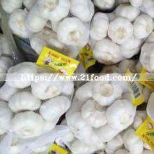 Fresh Pure White Garlic with White Skin