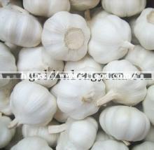 Chinese New Crop Pure White Garlic
