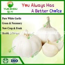 Export Chinese Fresh New Crop White Garlic Pure White