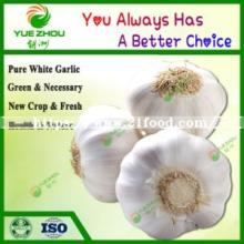 2019 Chinese Fresh Pure White with Cheap Price for Sale