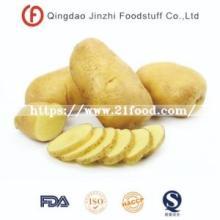 Fresh Vegetable  Holland  Sweet Potato