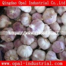 2018 China Red Fresh Normal White Garlic