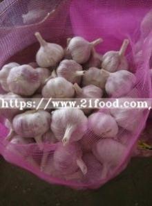 Export New Crop  Chinese   Pure   White   Garlic