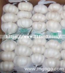 New Crop Fresh Chinese Pure White Garlic