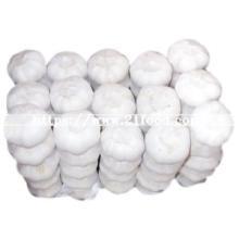 Fresh Chinese Pure White Garlic (5.5cm and up)
