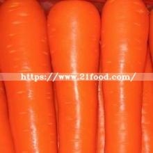 2019 Crop  Fresh   Red   Carrot