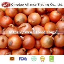 New Crop Chinese Fresh Yellow Onion