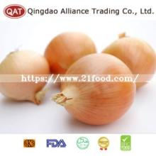 Fresh Yellow Pearl Onion with Export Standard