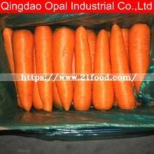 Good Quality Fresh Carrot / New Crop Fresh Carrot Supplier