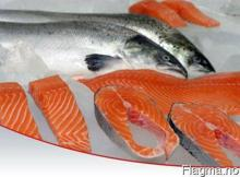Best Quality Salmon Fish for sell