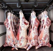 Frozen Beef Carcass