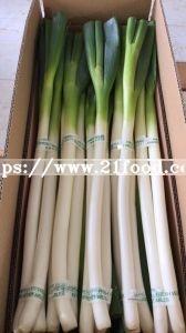 Fresh Scallion Chinese Shandong