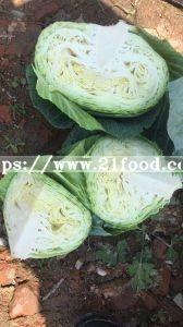 Fresh Green/ White   Cabbage