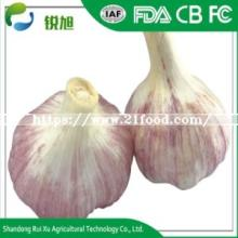 New Crop Fresh Normal White Bulk Garlic for Sale From Shandong China