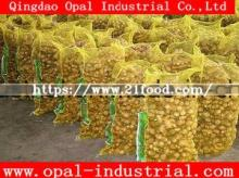 Chinese Supplier Air Dried Fresh Ginger
