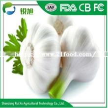 New Crop Fresh Garlic for Exporter in China
