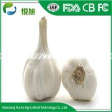 Chinese New Crop Fresh White Garlic Price