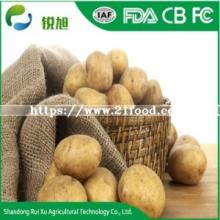 Chinese Organic and Healthy Feature Fresh Vegetable  Holland  Potatoes with Top Grade