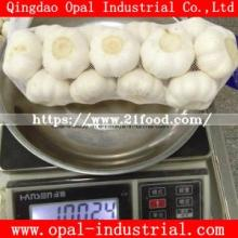 10kg 20kg Mesh Bag Packing New Garlic with Fresh Normal Pure White Garlic From China