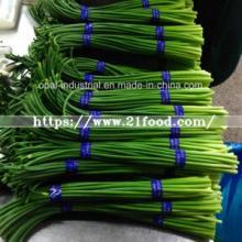 Fresh Vegetable Yong Garlic Shoot From China