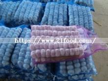 Clean Normal White Garlic in Mesh Bag