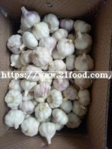 New Crop Fresh Cooling Pure White Garlic Product