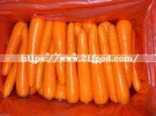 Bright Red Color Fresh New Crop Carrot