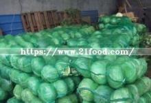 High Quality Vegetable China Carton Fresh Long Green  White   Cabbage