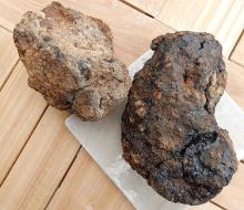 Hyraceum (Africa Stone)