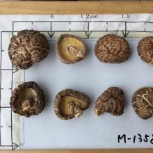 Dried flower  Shiitake   Mushroom
