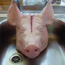 Frozen Pork Carcass for sale
