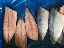 Frozen pacific mackerel fillets 100g+/pc